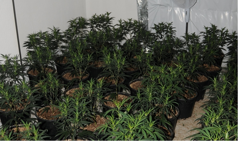 People smuggler put migrants to work in his north west cannabis farms